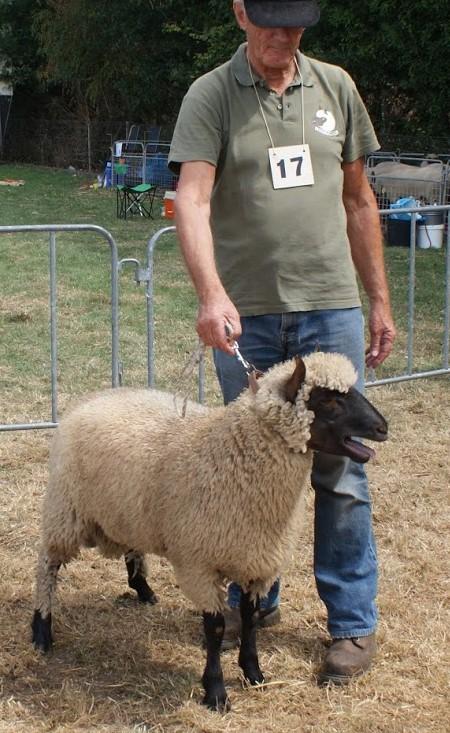 schapen: ramlam SBN 97002 op de keuring Zuid 2018